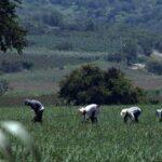 INCERTIDUMBRE ENTRE PRODUCTORES POR DESPIDO DE TRABAJADORES DE CONAGUA